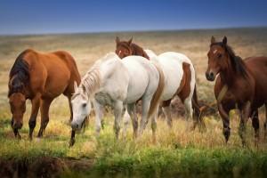 Laguna Horses copy